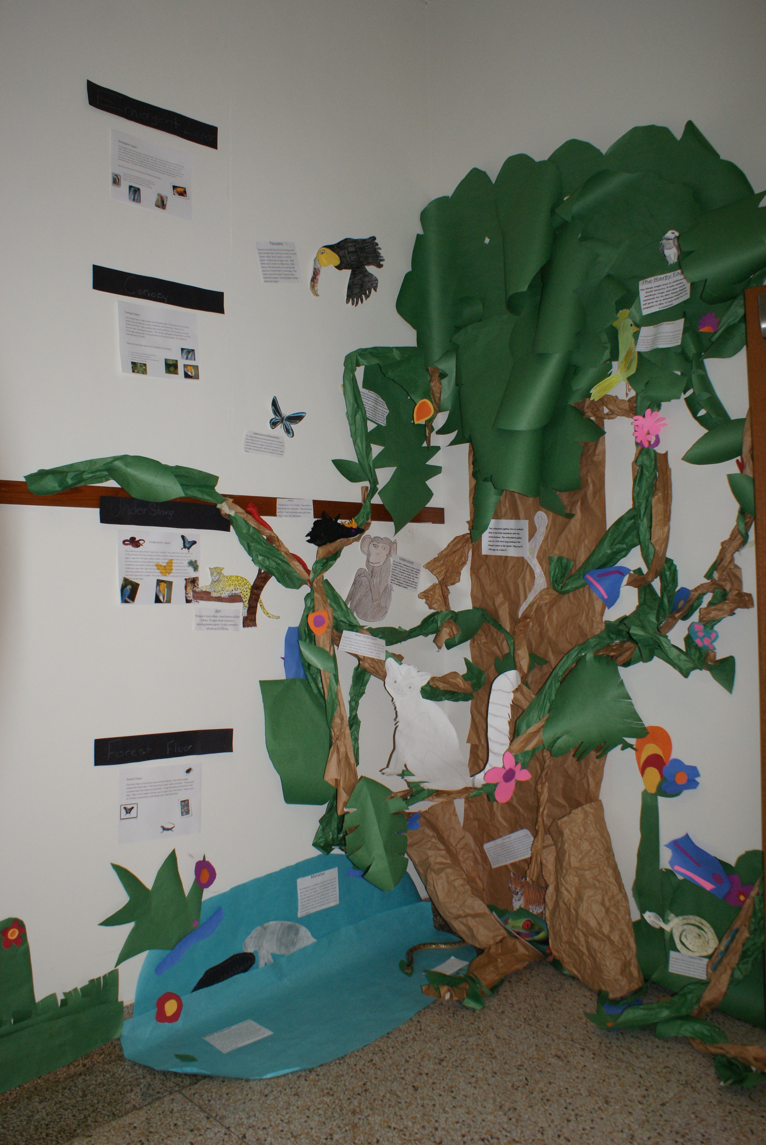 1000+ images about RAINFOREST BULLETIN BOARD on Pinterest ...