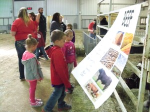 2016 April 15 Kindergarten to the baby animal farm 011